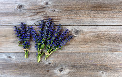 Fresh spring wild flowers on rustic wood background Royalty Free Stock Images