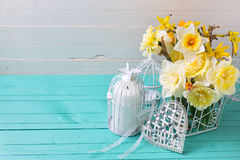 Fresh  spring yellow daffodils flowers, decorative bird cage and Stock Photo