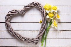 Fresh  spring yellow daffodils  flowers and decorative heart  on Royalty Free Stock Images