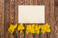Fresh  spring yellow  daffodils  flowers and empty tag on brown painted wooden planks. Selective focus. Place for text. Royalty Free Stock Photo