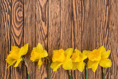 Fresh  spring yellow  daffodils  flowers and empty tag on brown painted wooden planks. Selective focus. Place for text. Royalty Free Stock Photos