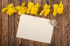 Fresh  spring yellow  daffodils  flowers and empty tag on brown painted wooden planks. Selective focus. Place for text. Royalty Free Stock Image