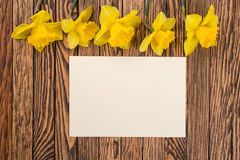 Fresh  spring yellow  daffodils  flowers and empty tag on brown painted wooden planks. Selective focus. Place for text. Stock Image