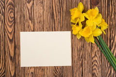 Fresh  spring yellow  daffodils  flowers and empty tag on brown painted wooden planks. Selective focus. Place for text. Fresh  spring yellow  daffodils  flowers Royalty Free Stock Photo