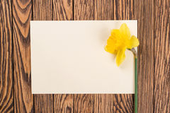 Fresh  spring yellow  daffodils  flowers and empty tag on brown painted wooden planks. Selective focus. Place for text. Fresh  spring yellow  daffodils  flowers Royalty Free Stock Image