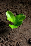 Fresh sprout. Growth, nature, green Royalty Free Stock Photo