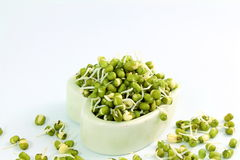 Fresh Sprouted mung beans or green gram beans in heart bowl Stock Photography