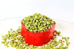 Fresh Sprouted mung beans or green gram beans in heart container Royalty Free Stock Images