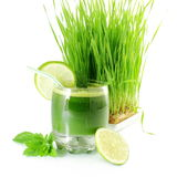 Fresh sprouted wheat grass juice with wheat grass in white background Stock Image