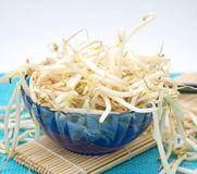 Fresh sprouts. Some fresh asian sprouts in a blue bowl Stock Image