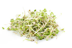 Fresh sprouts. On white background Royalty Free Stock Images