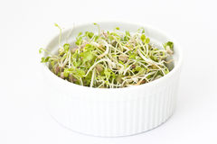 Fresh sprouts. Bowl full of fresh sprouts Royalty Free Stock Photos