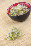 Fresh sprouts Stock Images