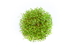 Fresh sprouts of alfalfa on white background. Fresh sprouts of alfalfa isolated on white background Stock Images