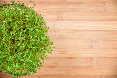 Fresh sprouts of alfalfa on wood Stock Photography