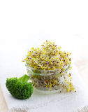 Fresh sprouts in a glass Royalty Free Stock Photo
