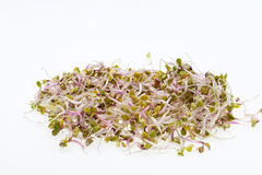 Fresh sprouts Royalty Free Stock Images