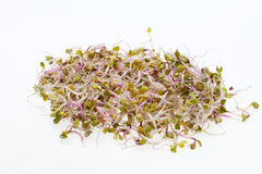 Fresh sprouts Stock Photography