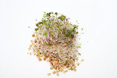 Fresh sprouts Royalty Free Stock Photos