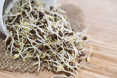 Fresh Sprouts. Heap of fresh Sprouts on wooden background Stock Photos