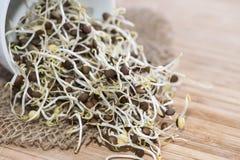 Fresh Sprouts Stock Photos