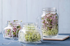 Fresh Sprouts In Mason Jar Royalty Free Stock Photography