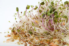 Fresh sprouts isolated on white background Royalty Free Stock Photo