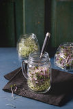 Fresh  Sprouts in mason jar. Healthy diet. Fresh Garlic and Radish Sprouts in glass mason jars with fork inside, standing on gray textile napkin over blue wooden Stock Photos