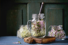 Fresh Sprouts in mason jar royalty free stock photo