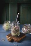 Fresh  Sprouts in mason jar Stock Photos