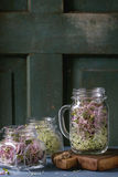 Fresh  Sprouts in mason jar Stock Images