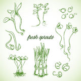 Fresh sprouts plants set.  elements. Stock Photography