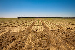 Fresh sprouts in a vast field under the bright sky. Spring pastoral rural landscape royalty free stock photos
