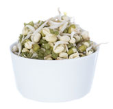 Fresh Sprouts on white Royalty Free Stock Images