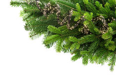 Fresh spruce sprigs with lights decoration Stock Images