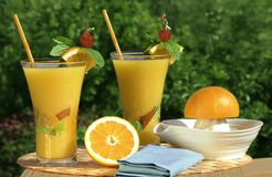 Fresh Squeezed Orange Juice. Glass's Of Fresh Squeezed Organic Orange Juice - Juicer And Oranges With Natural Outdoor Background Royalty Free Stock Images