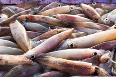 Fresh squid Royalty Free Stock Images