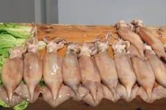 Fresh squid Stock Images