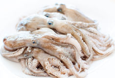 Fresh Squid Stock Image