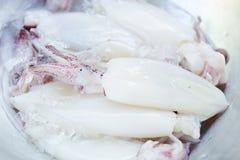 Fresh squid Stock Photos