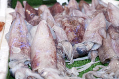 Fresh Squid In Fish Market Stock Photography