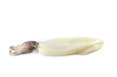 Fresh squid Royalty Free Stock Photography