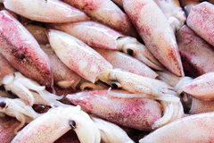 Fresh squid lay on tray in the thai market Royalty Free Stock Photo