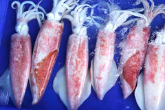 Fresh squid in the market. Royalty Free Stock Photo