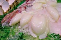 Fresh squid Royalty Free Stock Photo