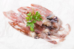 Fresh squid Royalty Free Stock Photos