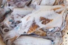 Fresh squid for sale in Thai market Stock Photo