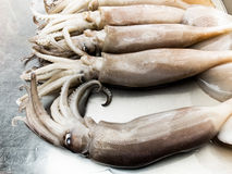 Fresh squid on the seafood market Royalty Free Stock Image