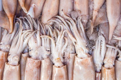 Fresh squid in seafood market. Selective focus on close up of fresh squid , fresh cuttlefish are  components or product used to make seafood which sell in fish Royalty Free Stock Images