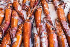 Fresh squid seafood for sale at a market in Palermo, Sicily, Ita. Ly Stock Photos